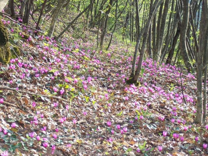 100 4155 700x525 Flora