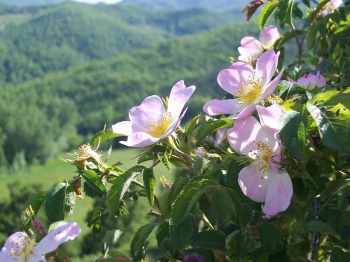 100 4200 700x525 Flora