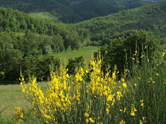 100 4204 700x525 Flora