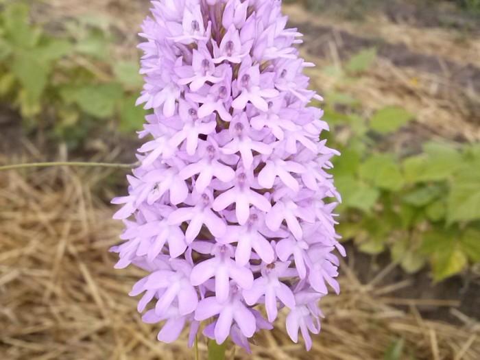 CAM01176 700x525 Flora