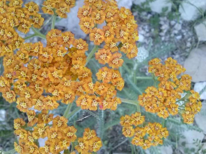 CAM01208 700x525 Flora