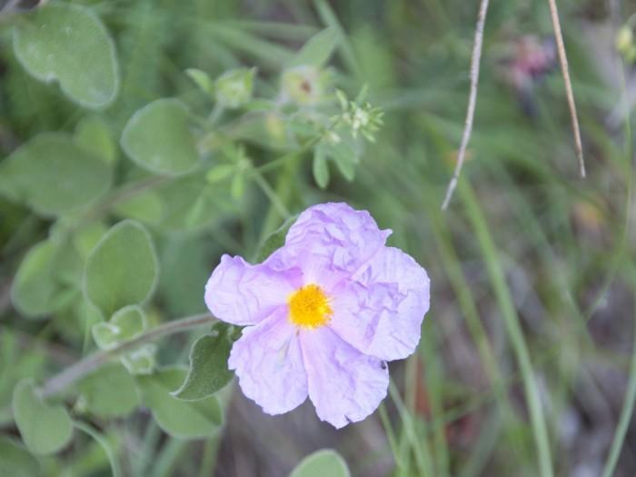 DSC0152 700x525 Flora