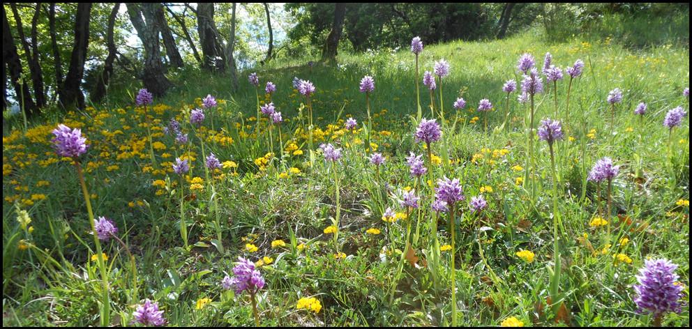 Prato fiorito Primavera 992x472 Appartamento Primavera